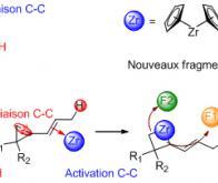 Une avancée majeure en chimie : l'activation des liaisons carbone-carbone