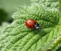 Une baisse inquiétante de la population d'insectes en Allemagne