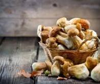 Une consommation quotidienne de champignons diminuerait le risque de cancer de 45 %