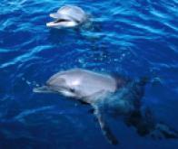 Une grande partie de la vie marine pourrait disparaître