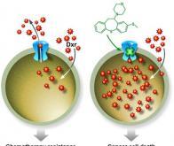 Une molécule capable d'améliorer l'efficacité des chimiothérapies
