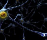 Une neuroprotéine serait impliquée dans le risque d'autisme
