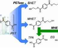 Une nouvelle enzyme synthétisée par hasard dégrade efficacement le plastique