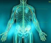 Une nouvelle technique permet une régénération accrue des nerfs endommagés