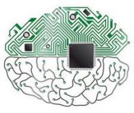 Une puce organique pour enregistrer l'activité cérébrale