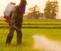 Une vaste étude confirme les risques de cancer encourus par les agriculteurs français