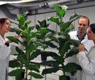 Vers une croissance illimitée des plantes ?
