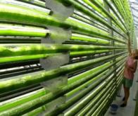 Vers une production industrielle et propre d'hydrogène grâce aux micro-algues !