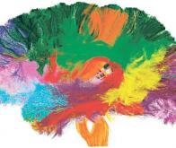 Voir les zones du cerveau qui s'activent quand nous rêvons...