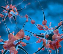 Cancer, neurones et évolution : un nouveau paysage scientifique se dessine