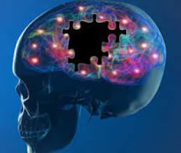 Le cerveau n'en finit de révéler sa prodigieuse complexité