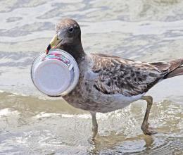 Les déchets plastiques : un nouveau défi planétaire