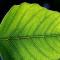 Une feuille artificielle produit un gaz de synthèse durable