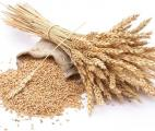 Les céréales complètes, un outil efficace en prévention