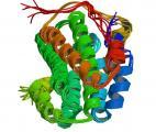 Maladie d'Alzheimer : les 3 ApoE modulent différemment le métabolisme cérébral du glucose