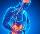 Axe intestin-cerveau : un nouveau monde biologique à explorer…