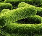 Bactéries : un fanstastique pouvoir d'adaptation à leur environnement