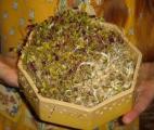 Cancer du poumon : le soja prolonge la survie !