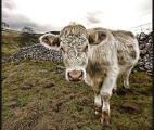 Changement climatique : vers une réduction drastique de notre consommation de viande ?
