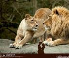 Chez les mammifères sauvages aussi, les femelles vivent plus longtemps