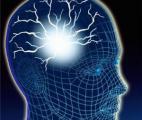 Comment le cerveau mémorise notre environnement pour nous permettre de nous orienter