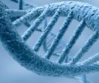 Comment un détecteur immunitaire inné reconnaît son propre ADN
