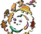 Comprendre l'évolution au niveau du génome…