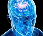 Découverte d'un dispositif -anti-distraction- dans le cerveau