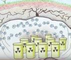 Des bactéries pour sécuriser le stockage des déchets nucléaires