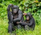 Des chercheurs ont augmenté le cerveau de singes à l'aide d'un gène humain !