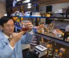 Des chercheurs parviennent à transformer la cellulose en amidon !