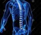 Des disques intervertébraux tout neufs grâce à la thérapie cellulaire !