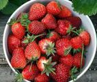 Des fraises pour protéger le cœur