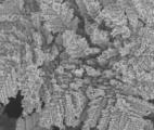 Des nano-fougères de Zinc capables de recycler le CO2