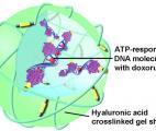 Des nanoparticules contre le cancer