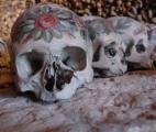 Des scientifiques découvrent l'évolution des crânes