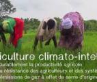 Des systèmes de culture «climato-intelligents» pour s'adapter au changement climatique