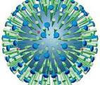 Deux signatures permettent de distinguer infections virales et bactériennes et la grippe