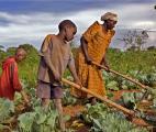 Comment nourrir la planète en 2050 ?