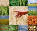Il y a assez de terres cultivables pour nourrir l'humanité en 2050 !