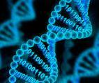 L'ADN : le stockage ultime de l'information ?