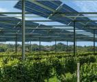 L'agrivoltaïque : un formidable potentiel pour l'énergie solaire…et l'agriculture
