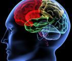 Le Cerveau : un océan de complexité qui commence à livrer ses secrets