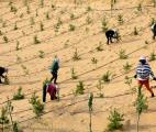 Reboiser la planète et maintenir la biodiversité de la forêt : un défi mondial pour l'avenir de l'Humanité