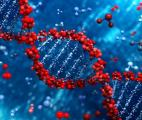 Stocker toute la mémoire de l'Humanité sur quelques kilos d'ADN…