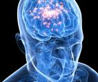 Certaines épilepsies sont-elles d'origine auto-immune ?