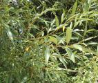 Grande Bretagne : la diagonale ventée qui booste les biocarburants