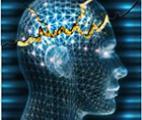 """Identification d'un """"interrupteur"""" responsable de la transformation d'un cerveau sain en cerveau épileptique"""