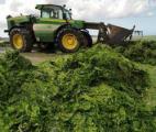 La Bretagne en quête de l'arme idéale contre les algues vertes