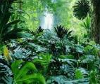 La ceinture de pluies tropicales lourdement affectée par le réchauffement climatique